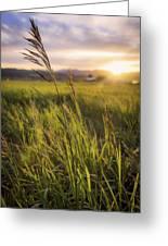 Meadow Light Greeting Card