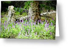 Meadow Lupine Greeting Card