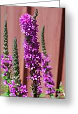 Meadow Sage Close Up Greeting Card