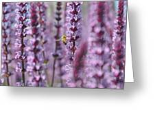Meadow Sage Greeting Card