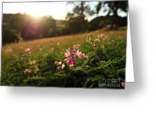 Meadow Sunset Greeting Card