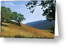 Meadow View Summer Greeting Card
