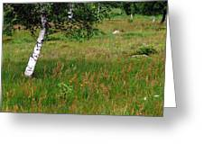 Meadow With Birch Trees Greeting Card