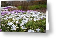Meadow With Flowers At Botanic Garden In The Blue Mountains Greeting Card