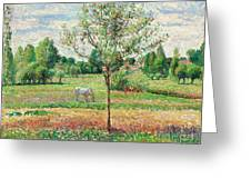 Meadow With Grey Horse, Eragny Greeting Card