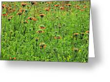 Meadow With Orange Wildflowers Greeting Card