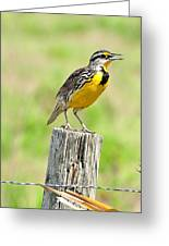 Meadowlark 7 Greeting Card