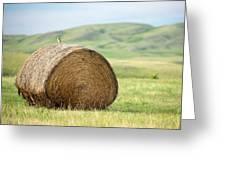 Meadowlark Heaven Greeting Card