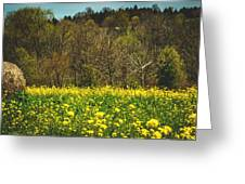 Golden Hay  Greeting Card