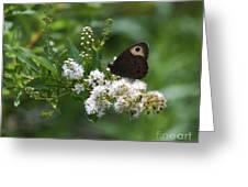 Meadowsweet Wood Nymph Greeting Card