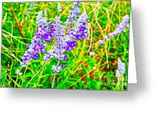 Mealy Blue Sage Greeting Card