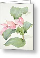 Medinilla Magnifica Greeting Card by Sarah Creswell