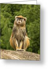 Meditating Monkey Greeting Card