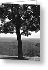 Meditation Tree  Greeting Card