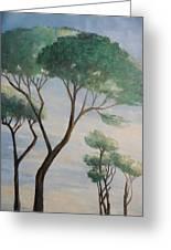 Mediterranean Pines Greeting Card