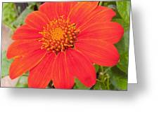 Medium Orange Daliha Greeting Card