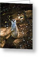 Meerkat     Say What Greeting Card