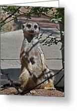 Meerkat 2 Greeting Card