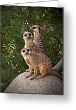 Meerkat Hill Greeting Card