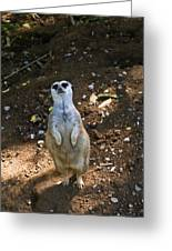 Meerkat Poising Greeting Card
