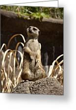 Meerkat Poser Greeting Card
