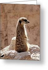 Meerkat Standing On Rock And Watching Greeting Card