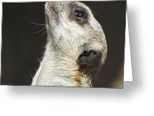 Meerkat#1 Greeting Card