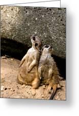 Meerkats Keeping An Eye Out Part 2 Greeting Card