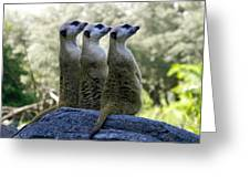 Meerkats On The Lookout Greeting Card