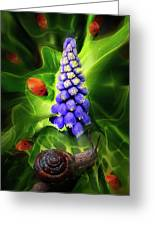 Meet Me At The Hyacinth Greeting Card