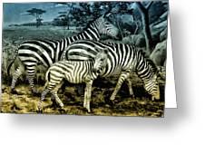 Meet The Zebras Greeting Card