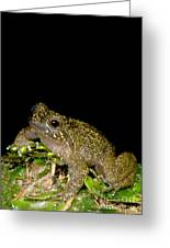 Mehu�n Green Frog Greeting Card