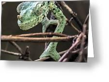 Mellers Chameleon Portrait 3 Greeting Card