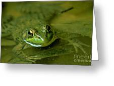 Mellow Frog Greeting Card