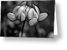 Mellow Yellow - Paint Bw Greeting Card