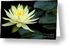 Mellow Yellow Water Lily Greeting Card