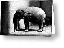 Melancholy Elephant Greeting Card