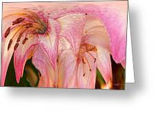 Melting Lilly Greeting Card