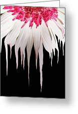 Melting Petals Greeting Card