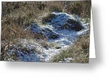 Melting Snow On Plants Greeting Card