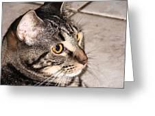 Melvin The Wondercat Greeting Card