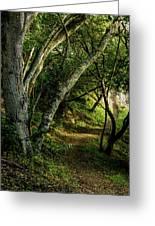 Mendoza Trail Greeting Card