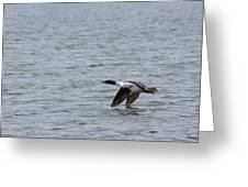 Merganser Duck Greeting Card