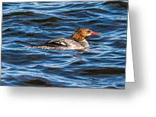 Merganser Greeting Card