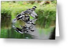 Mergansers In Flight Greeting Card