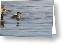 Mergansers Join In Greeting Card