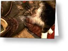 Merlin A True Mainer Greeting Card