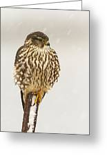 Merlin In A Snow Storm Greeting Card