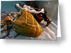 Mermaid On A Shell Greeting Card