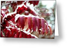 Merry Christmas Red Leaves  Greeting Card